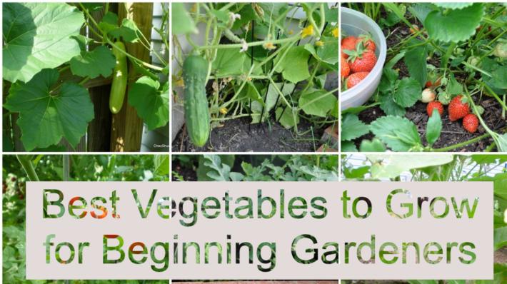 Best Vegetables to Grow for Beginning Gardeners