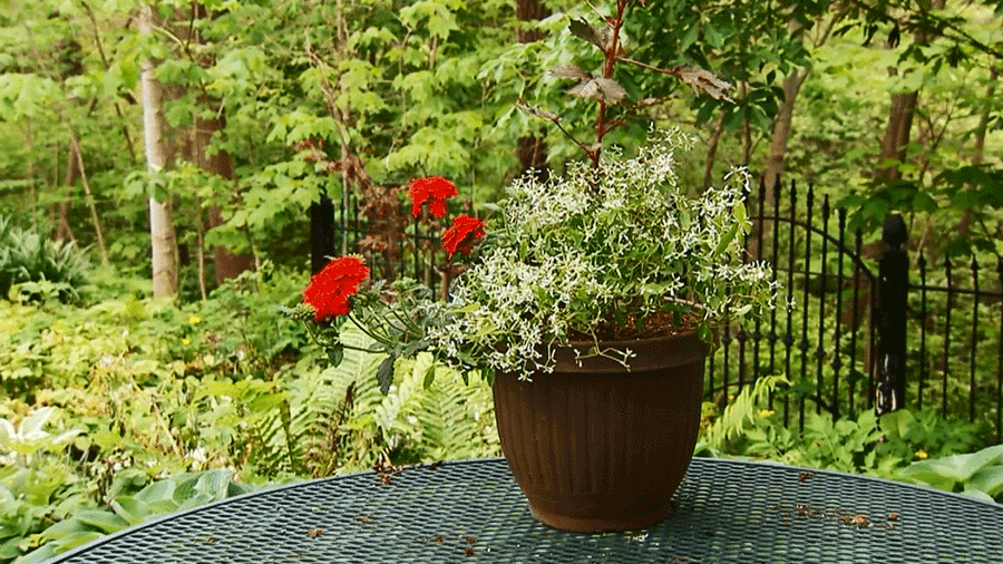 Choose the Perfect Garden Container Mix