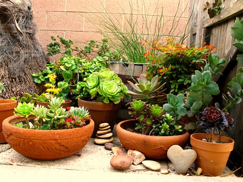 Design the Container for Planting